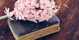 פרחים על ספר